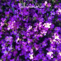 紫の花達が満開