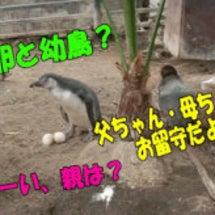 ペンギンドラマ