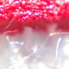 プリントを拡大してインクの表面を見たらの画像
