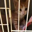 火曜日の保護 仔猫4…