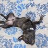 リラックスしすぎな犬の画像