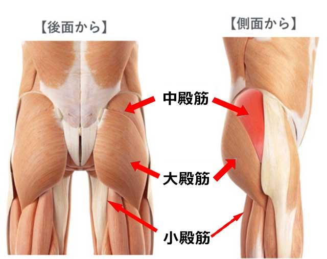 「中臀筋」の画像検索結果