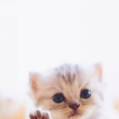 猫村さん④ 自分から誘った2回目デートの結果1の記事に添付されている画像