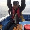 29日の釣果の画像