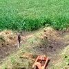 畑の水やりの新兵器と驚きの種まき方法の画像