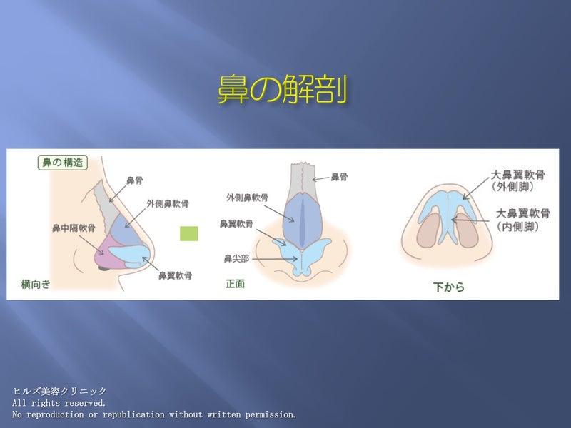 鼻の解剖イメージ