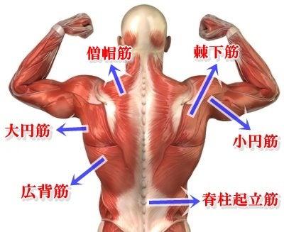 「背中の筋肉」の画像検索結果