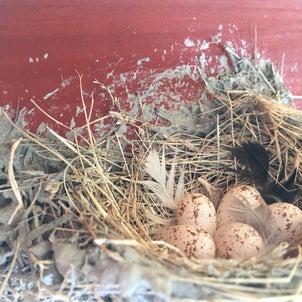 我が家のツバメも卵からヒナになりましたの画像