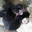 実家の庭で産まれた猫