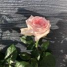 開花の記事より
