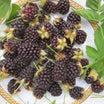 ブッラクベリーの収穫です