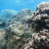 6月最初は北風で青の洞窟は中止に・・・サンゴビーチで体験ダイビングお楽しみいただきました♪の画像