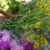 庭のお花が花盛りの画像