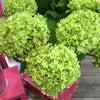季節のお花も入荷しています!の画像