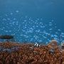 ダイビング中の魚写真