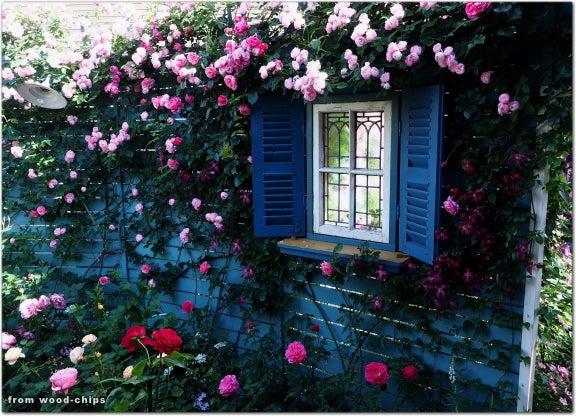 窓辺 バラ