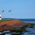 【カナダ】プリンスエドワード島の魅力の記事より