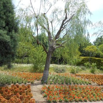 イギリス庭園 in 道の駅みやま(深山公園)の記事に添付されている画像