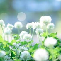 福岡の不適切保育の報道に思うことの記事に添付されている画像