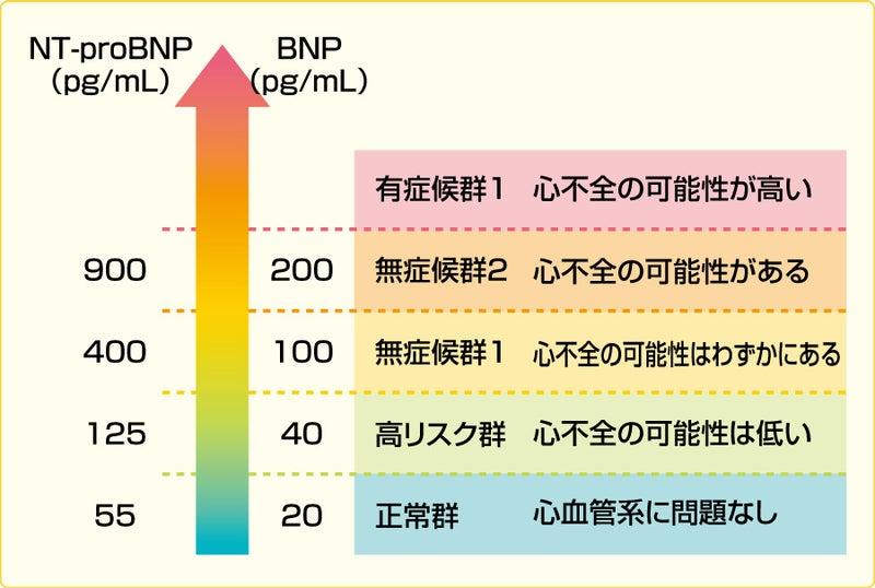 bnp と は