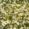 ハーブウォーターで、日焼けやかゆみのケアを。の画像