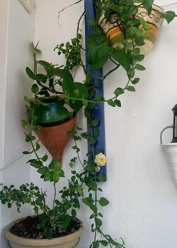 2018-sun room-verde-3