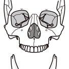 顎関節と〇〇〇の関係は深い!の記事より