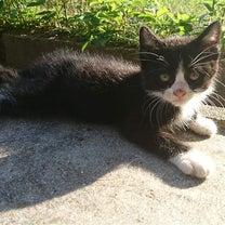 春生まれの子猫たちの記事に添付されている画像