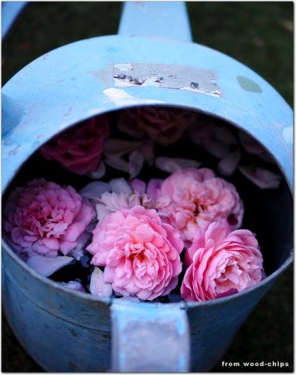 切り花 バラ