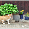 広島県尾道の猫ちゃんたち♪その2の画像