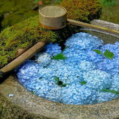 楊谷寺(京都府長岡京市)の御朱印の記事に添付されている画像