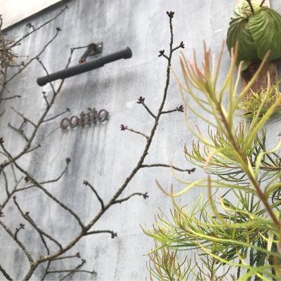 コチトcotito 花とお菓子とカフェのお店の記事に添付されている画像