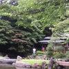 靖国神社のお茶会の画像