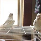 鳥ッキー(tricky)!!