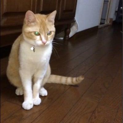 迷い子の猫さんを探していますの記事に添付されている画像