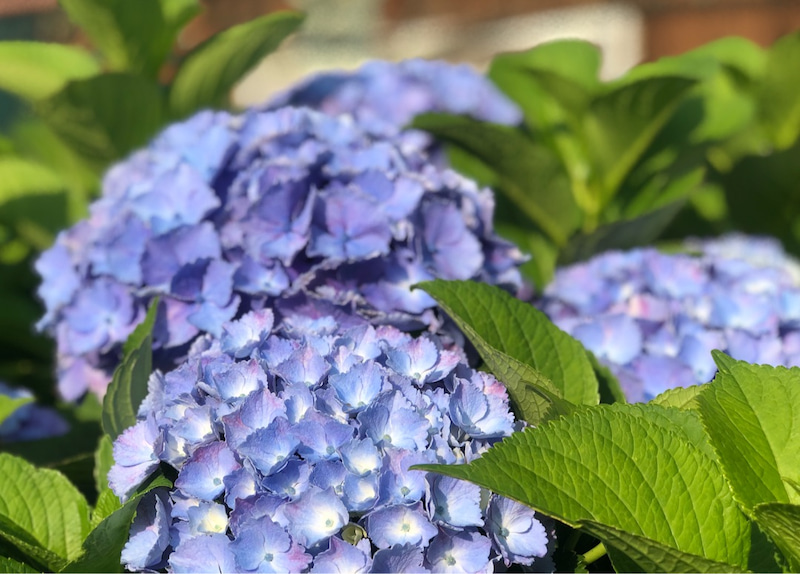 6月の花たち Mmana Nicoのブログ