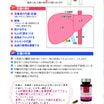 体のしくみ 肝臓