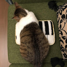 【その名はニョーン】またまた、幸せなネコ誕生!の記事より