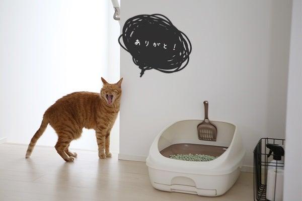 洗い 方 トイレ 猫 猫のトイレ掃除の方法(クエン酸、重曹、オキシクリーン)洗う頻度