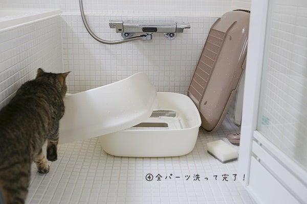 猫 トイレ 洗い 方