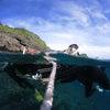 青の洞窟体験ダイビング&パラセーリング♪青の洞窟シュノーケル&パラセーリング専門店のテイクダイブの画像