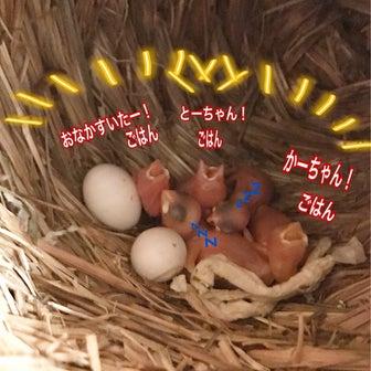 文鳥さん、家族が増えて賑やかです(*^ω^*)