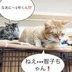 【火曜劇場】オヤツが待ち遠しい!by 智子&2号〜たんぽぽ4コマ〜No.49〜