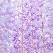 【ご感想】大輪の花が咲き誇る