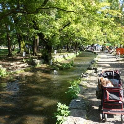 上賀茂神社 手作り市②の記事に添付されている画像