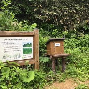黒松内岳の画像