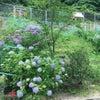 園庭よりの画像