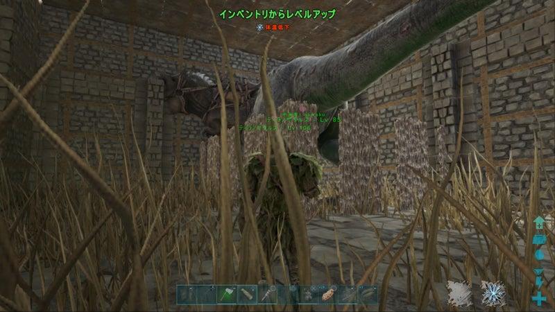 ホロ 鯖 設定 Ark