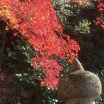 内緒の京都⑦    アフロ〜の記事に添付されている画像