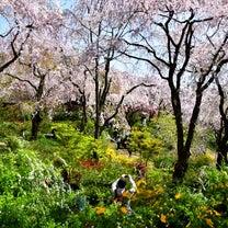 【おでかけ】2018/4/10 京都の記事に添付されている画像